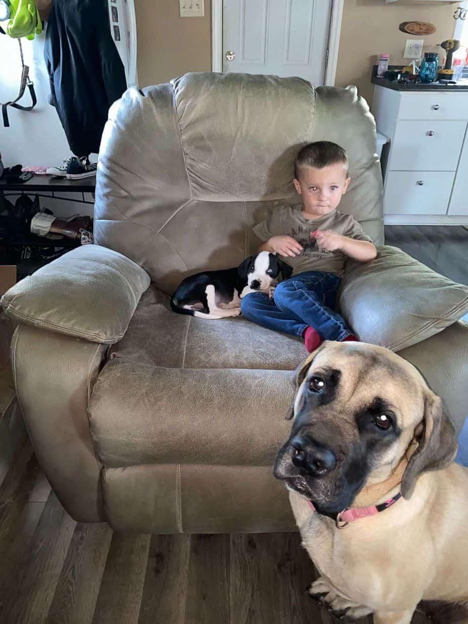 Bentley Boyers sentado em um sofá com Lacey e Remi, o Mastim Inglês, sentados no chão