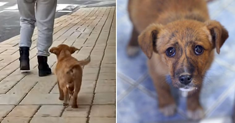Stray puppy looking for love follows couple to their home and ends up getting fostered - my positive outlooks