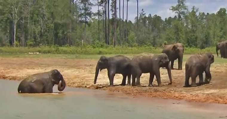 Former Ringling Bros. circus elephants are living their best lives at their beautiful 'retirement home' in Florida - my positive outlooks