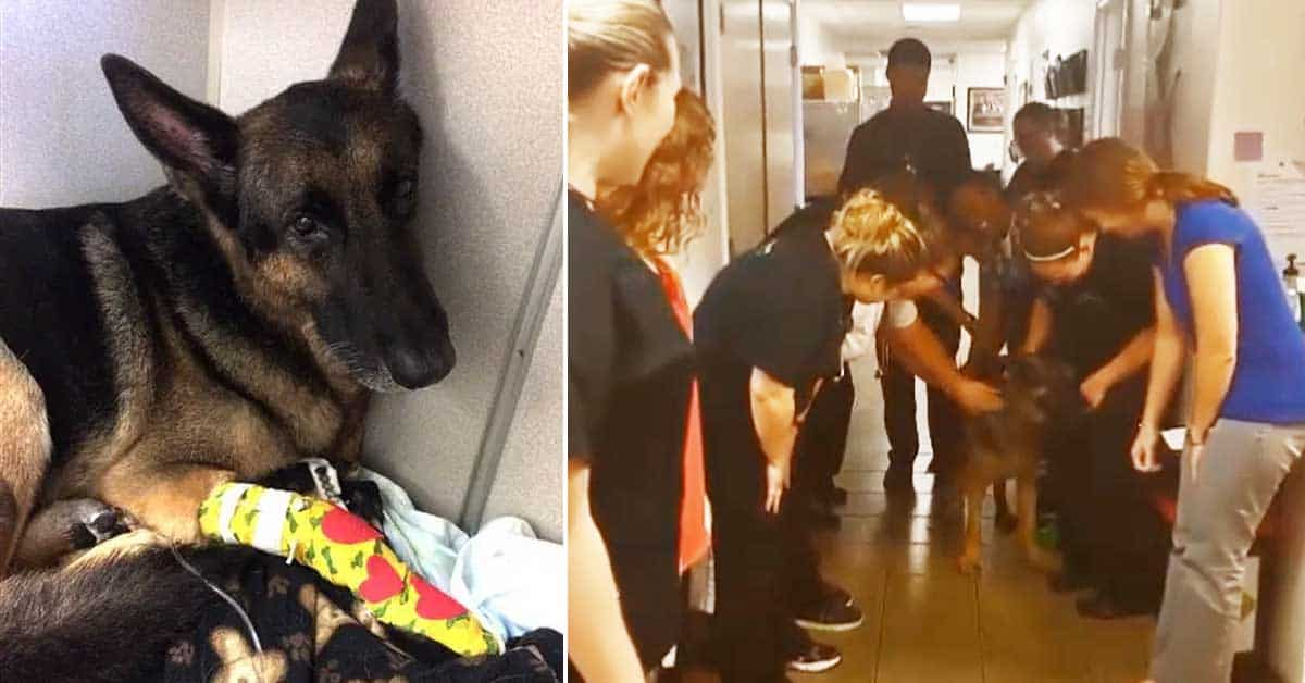 This hero dog saved his family's 2-year-old daughter from a devastating house fire - my positive outlooks