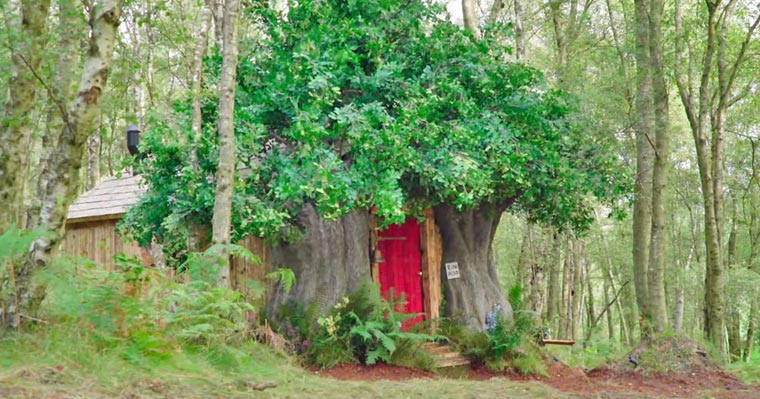 Look inside this adorable Winnie the Pooh-inspired tiny home tucked away in the forests of England - my positive outlooks